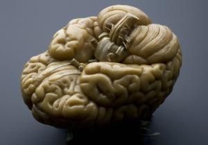 L0057095 Model of a human brain, Europe, 1801-1850